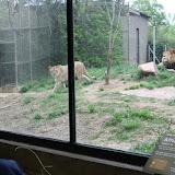 Zoo Snooze 2015 - IMG_7195.JPG