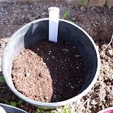 Gardening 2010 - 101_0241.JPG