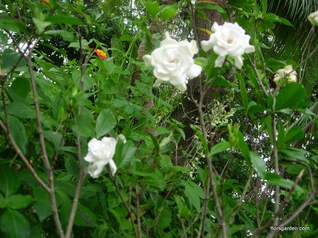 Scented Garden - DSCN3106.JPG