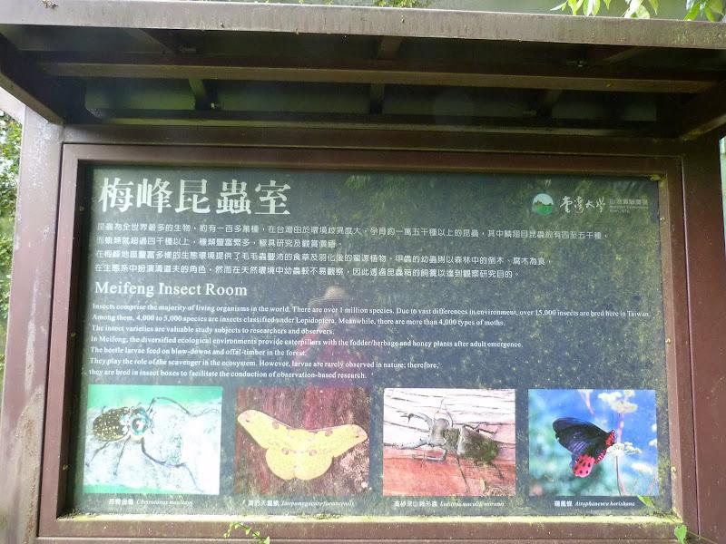 TAIWAN Dans la region de Wushe,au centre - P1140111.JPG