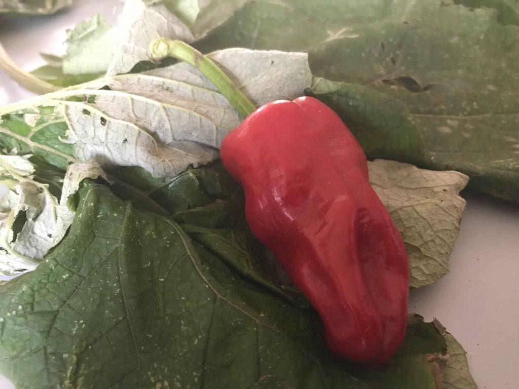 Vergeten groenten - IMG_8739.JPG