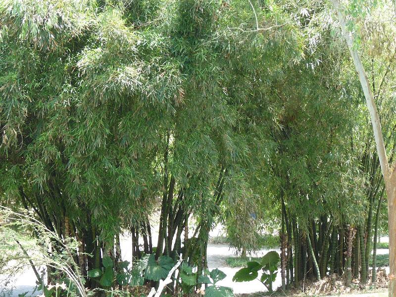 Chine .Yunnan . Lac au sud de Kunming ,Jinghong xishangbanna,+ grand jardin botanique, de Chine +j - Picture1%2B537.jpg