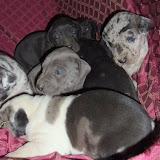 Star's babies at 3 weeks
