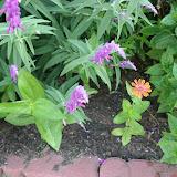 Gardening 2012 - IMG_3107.JPG