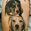 Beagle Duo