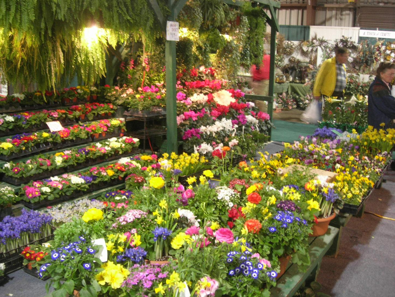 Dc Home And Garden Show Zandalusnet Part 57