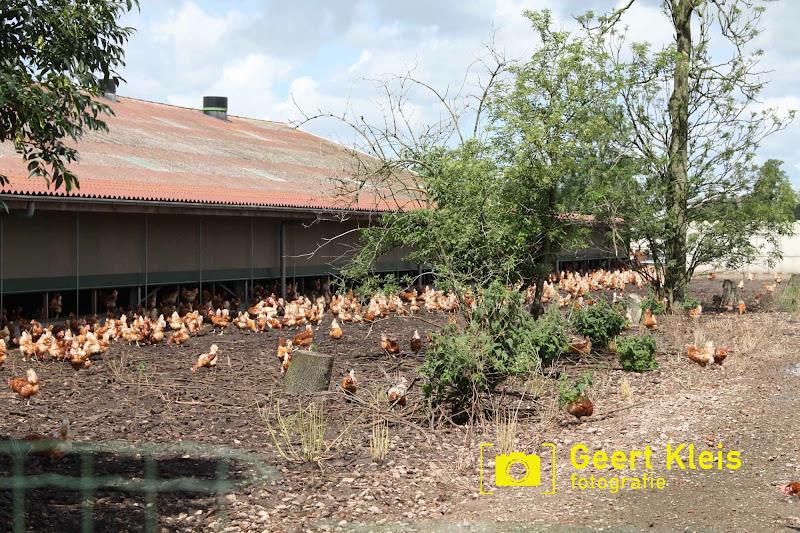 Boerendag Rouveen 2016 - IMG_2366.jpg