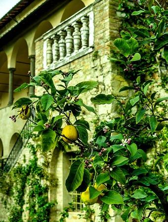 giardino pontignano 04