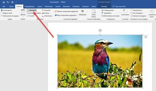 Rimuovere sfondo da foto online