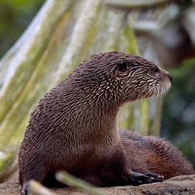 by Stephen Schutt - Animals Other Mammals