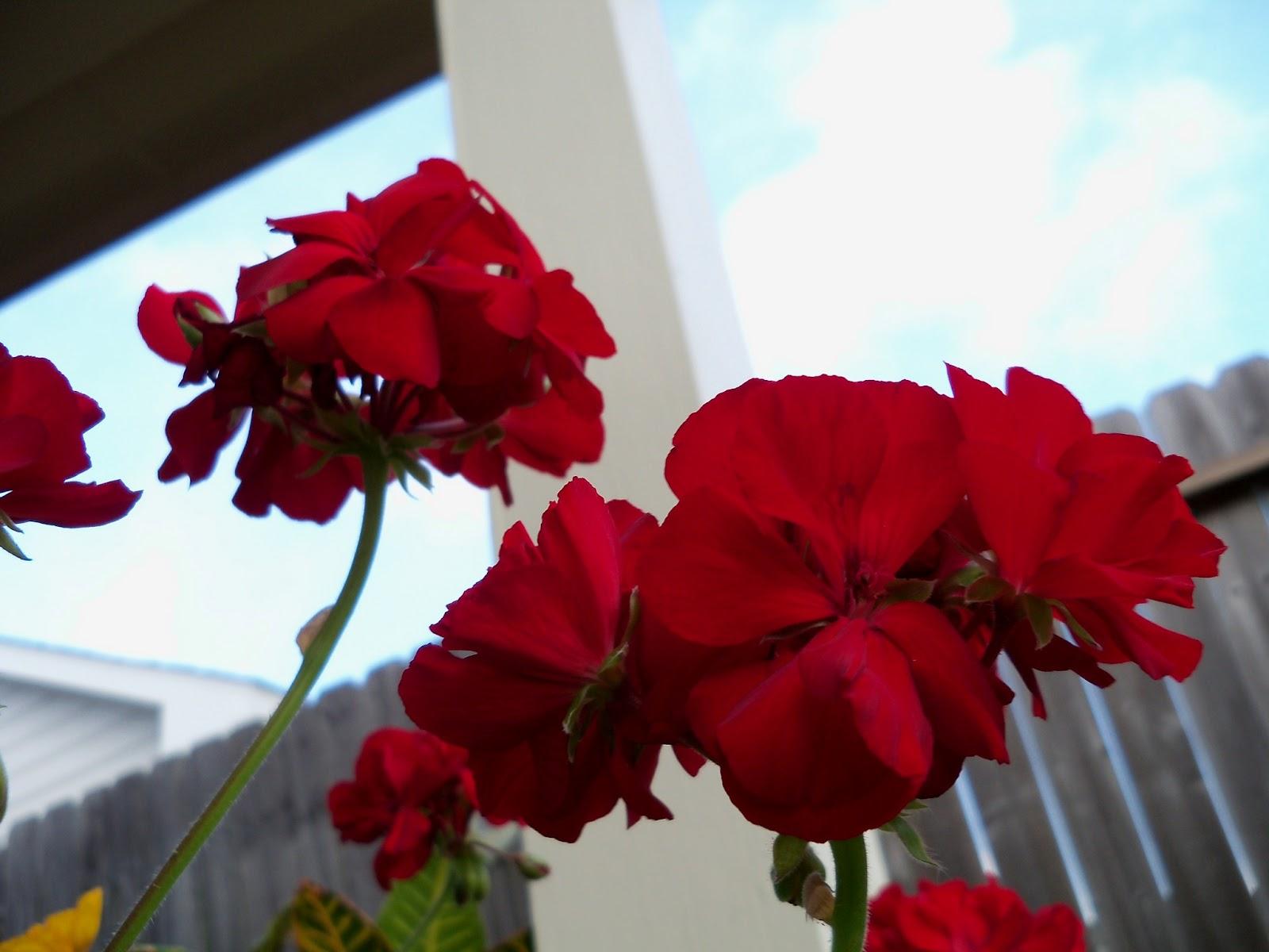 Gardening 2011 - 100_8264.JPG