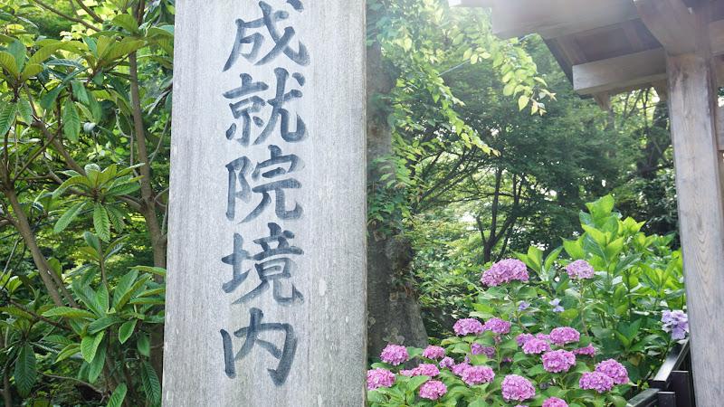 鎌倉 成就院 あじさい 写真1