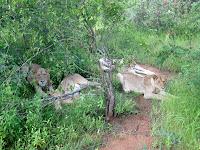 Balule Reserve - Kruger NP