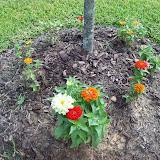 Gardening 2009 - 101_4926.JPG