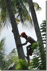 Week 2016-34 - Kokosnootplukker