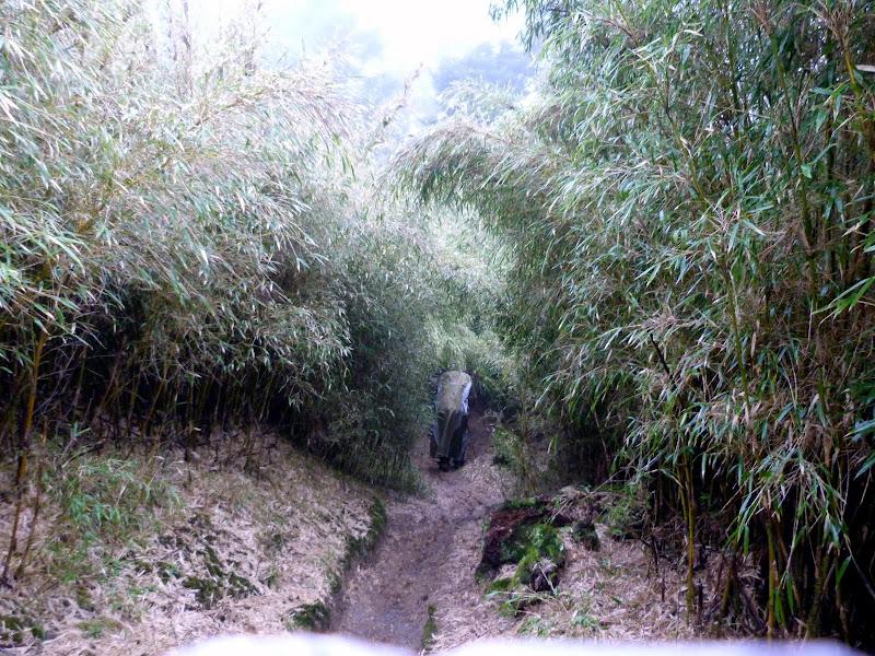 TAIWAN. Weekend Randonnée, Taipei à  Hehuanshan en passant par Puli, retour par les gorges de Taroko - P1280913.JPG