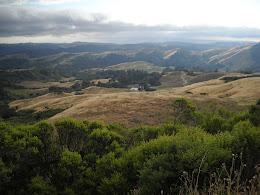 Hills north of Santa Cruz.