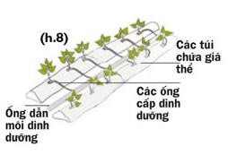 Các cách trồng rau thủy canh - 56874bc7a8046
