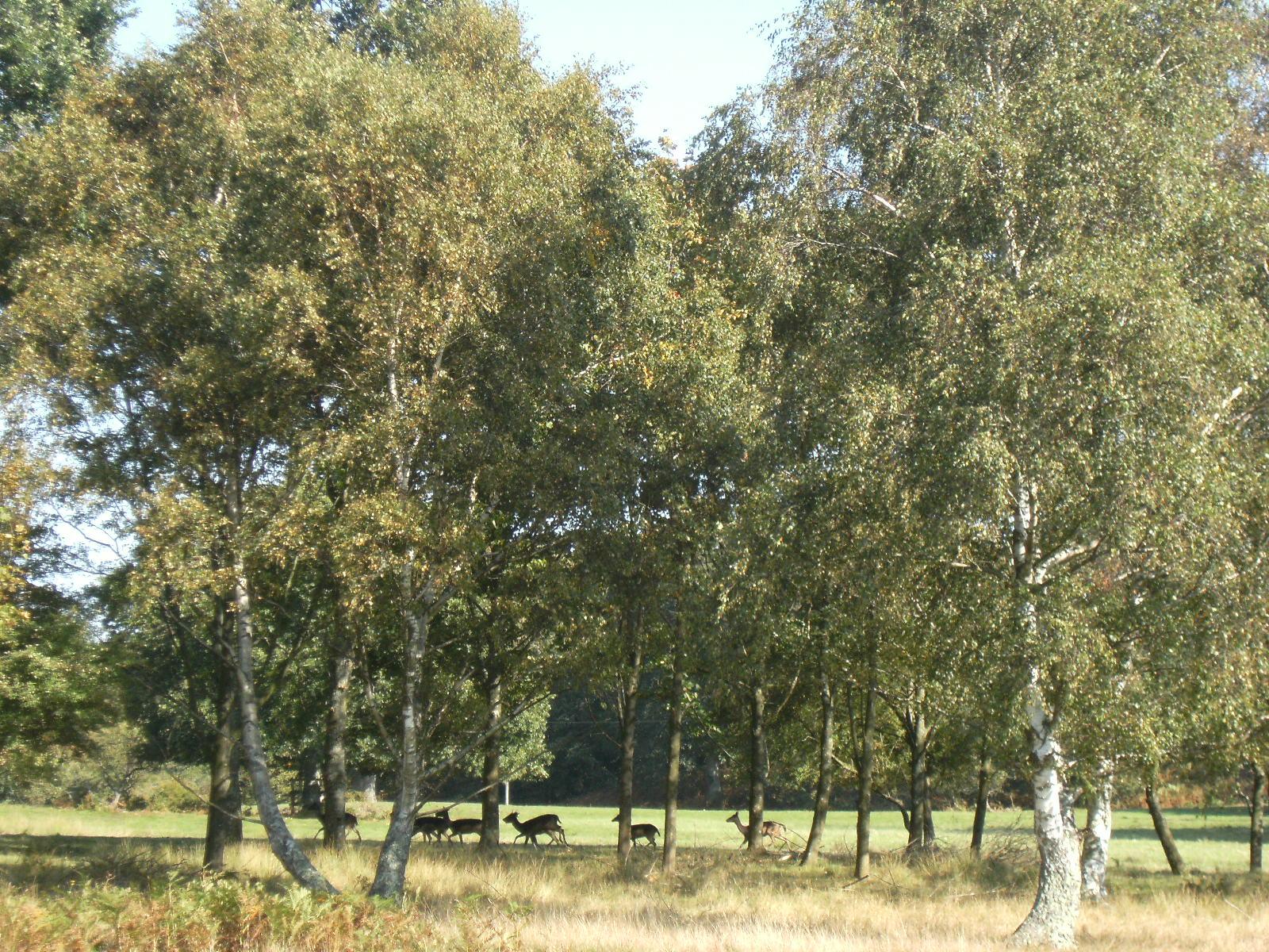 DSCF9933 Parham Park