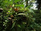 Flora und Fauna im Wolkenwald