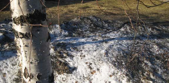 De laatste resten van die heerlijke sneeuw