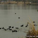 01-26-13 White Rock Lake - IMGP4336.JPG