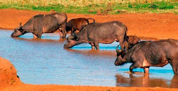 Férias no Quénia - Parque Nacional de Aberdare