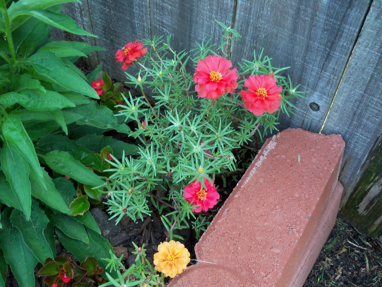 Gardening 2010, Part Two - 101_3259.JPG