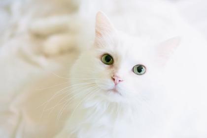حكم بيع وشراء وتربية القطط