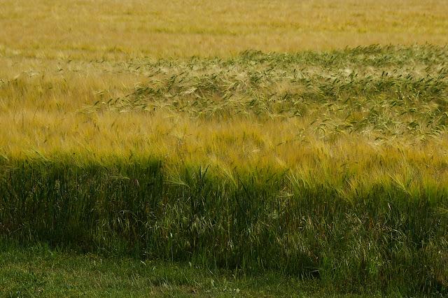 Les Hautes-Lisières (Rouvres, 28), 5 juin 2010. Photo : J.-M. Gayman