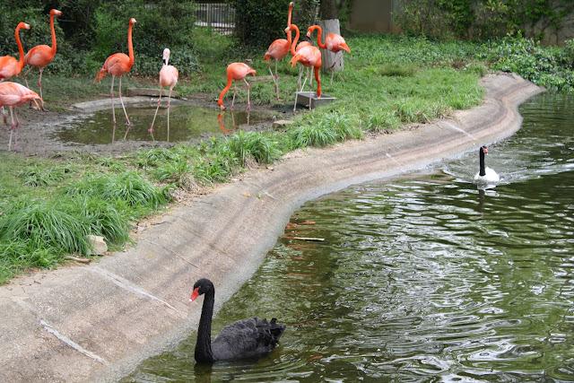 Zoo Snooze 2015 - IMG_7334.JPG