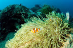 Corals settled here and with them come the fish.