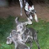 Greyson & MacKenzie at 4 months! - IMG_0003.JPG