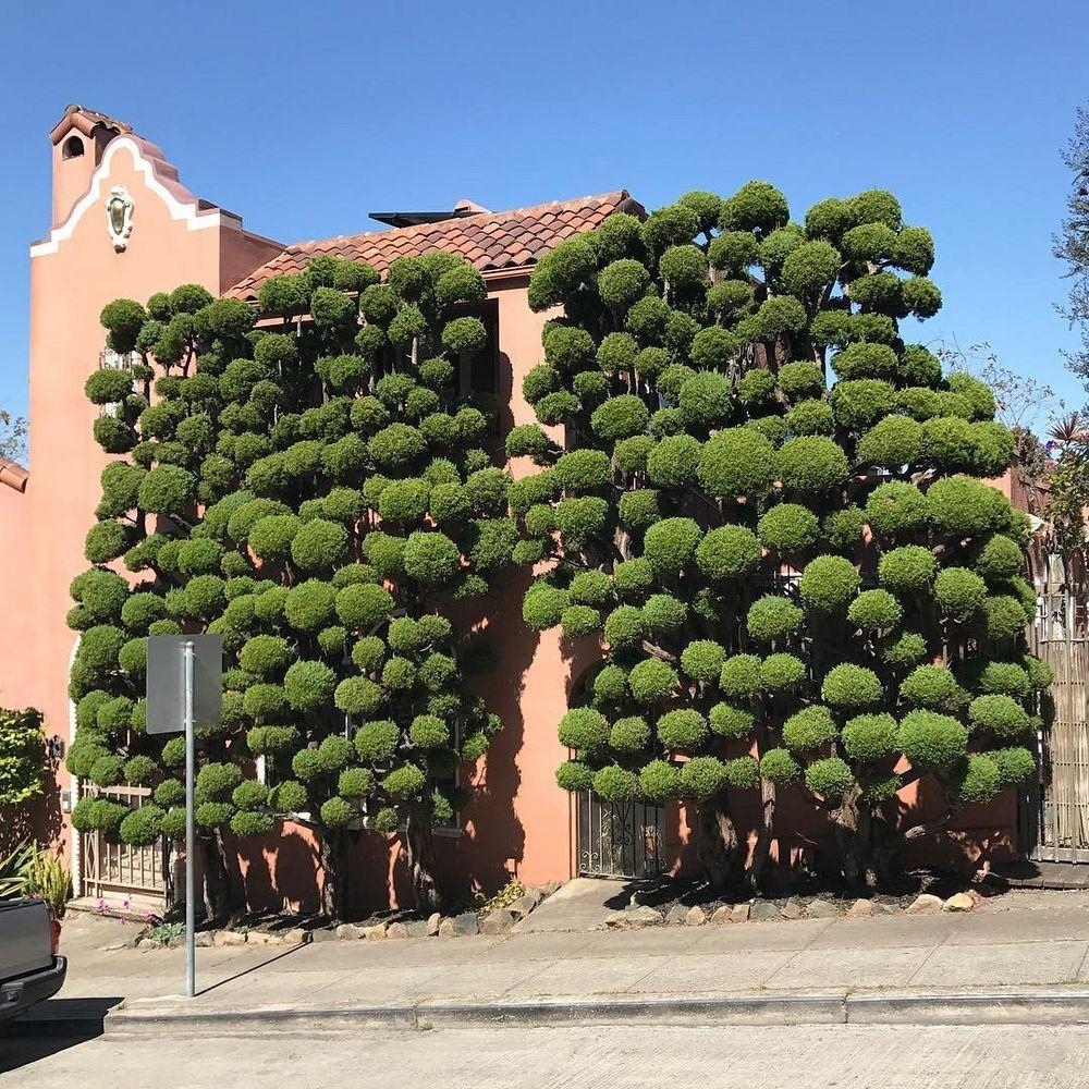 kelsey-mcclellan-topiary-1