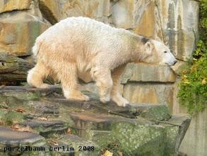 Photo: Knut mit interessantem Nackenschmuck ;-)