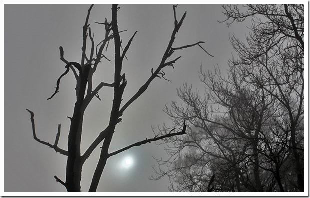 101205_winter_sun