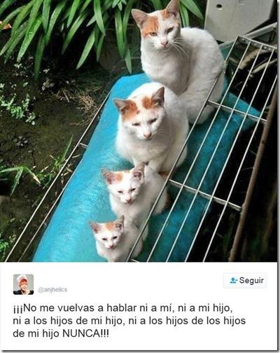humor twits de gatos (7)