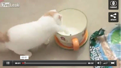 Cat jumps into a mug -- that's all