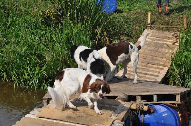 Survival voor Baas en Hond 2012 - DSC_0237.JPG