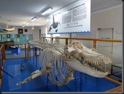 171122 044 Eden Killer Whale Museum