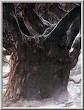 Old Evil Tree