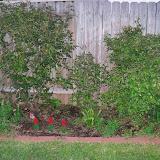 Gardening 2014 - 116_1133.JPG