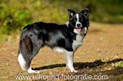 Huisdierfotografie - Huisdierreportage Hond (18 oktober 2009) - 5