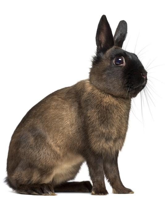 Image result for alaska rabbit