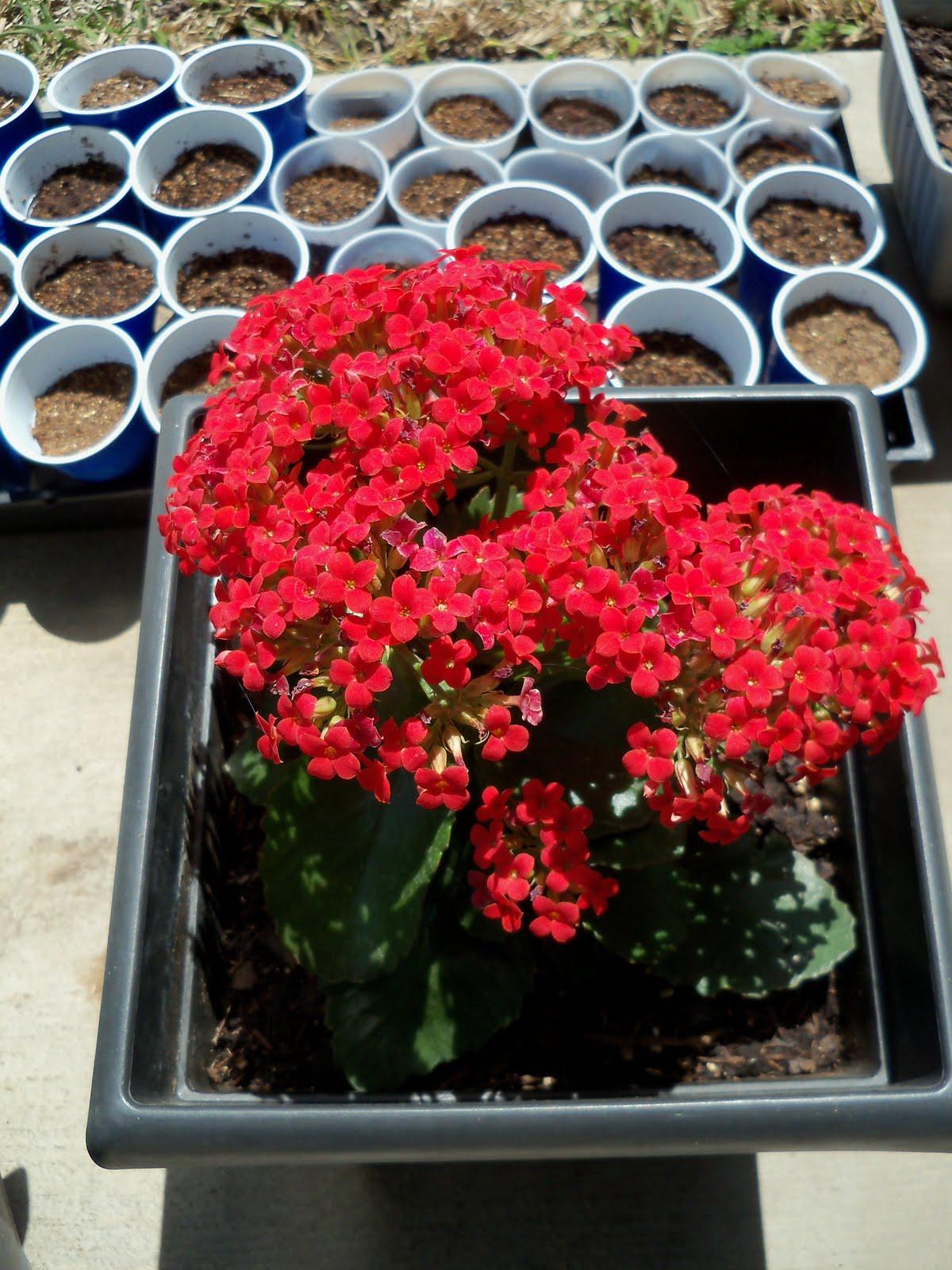 Gardening 2010 - 101_0584.JPG