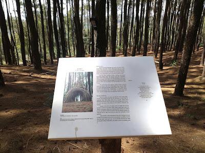 Hutan Pinus Pennger, Dlingo, Bantul