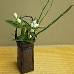 生花 活け花 華道 Ikebana flower arrangement 盆栽 Bonsai