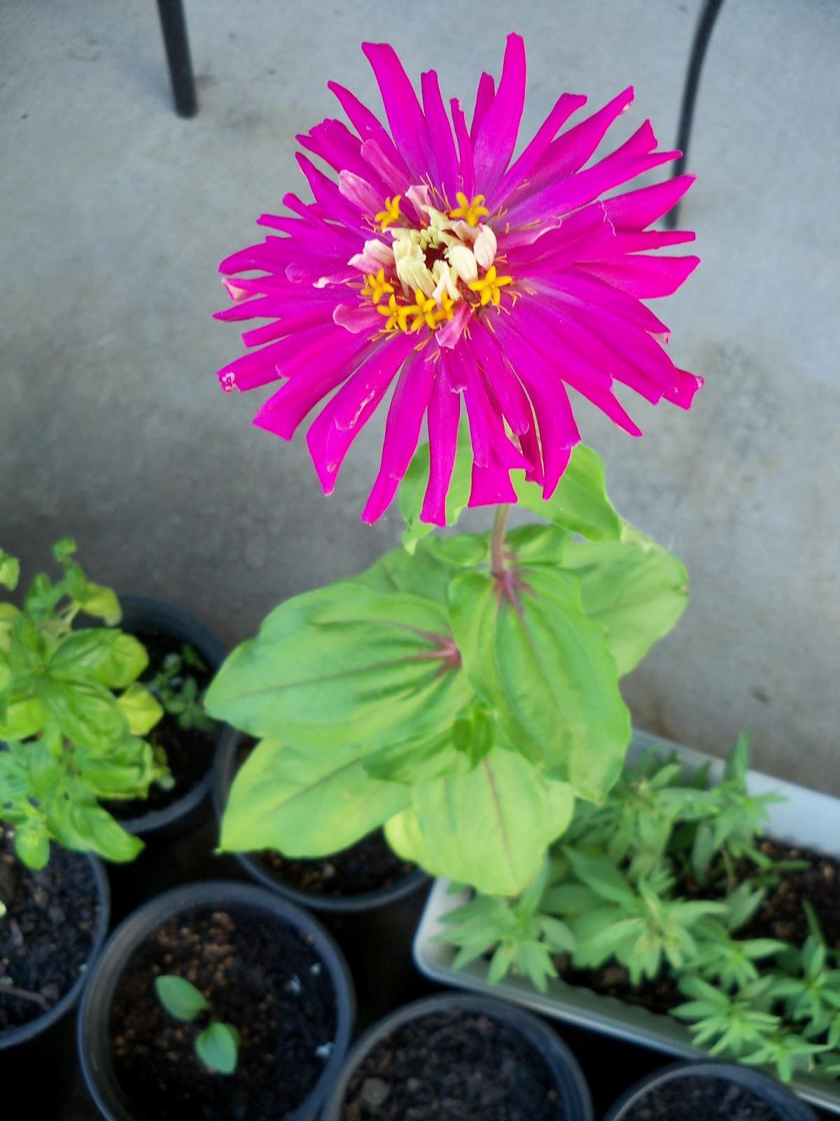 Gardening 2012 - 115_2346.JPG