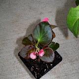 Gardening 2010 - 101_0313.JPG