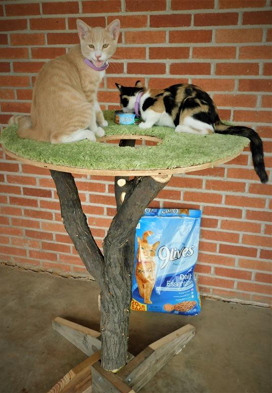DIY cat tree with cats #CelebratingMorris #shop